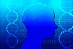 エリクソンの心理社会的発達理論について
